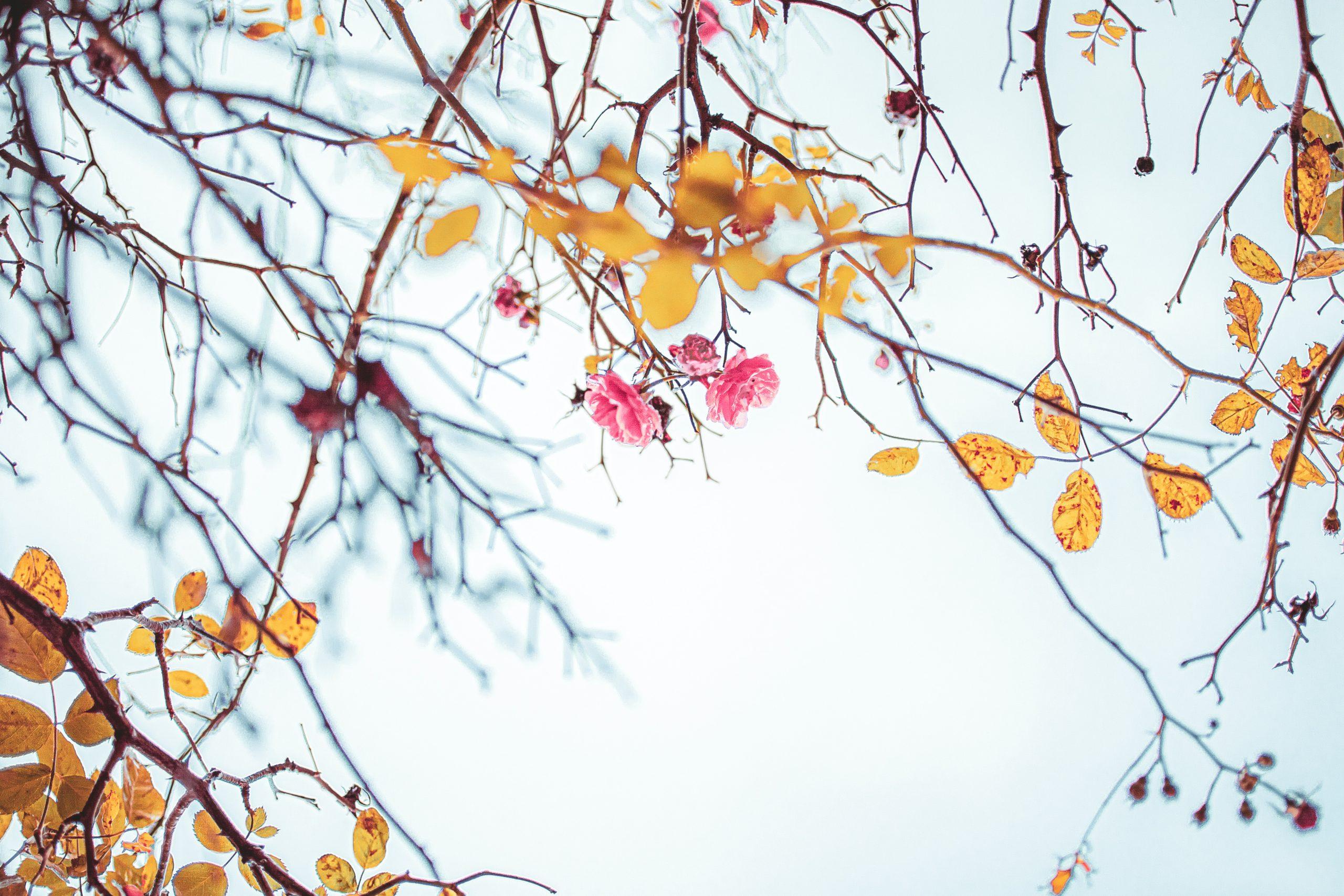 Hindi Inspirational poetry on life - मृत टहनियाँ > अर्चना की रचना